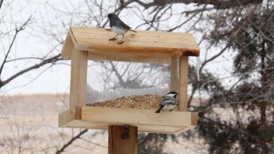 February for the birds: Area enthusiasts participate in annual count