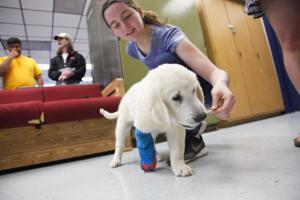 This pup was born with a bad limb. So a vet teamed with high schoolers to build him a new one.