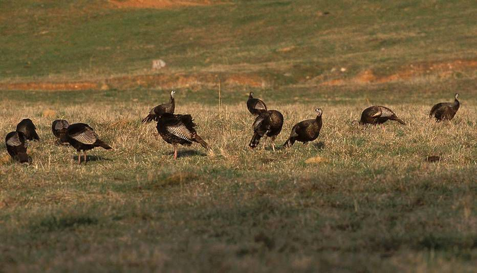 time for hunters to learn how to talk turkey