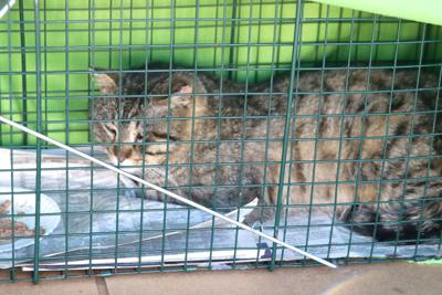 North Platte duo's efforts help curb feral cat numbers