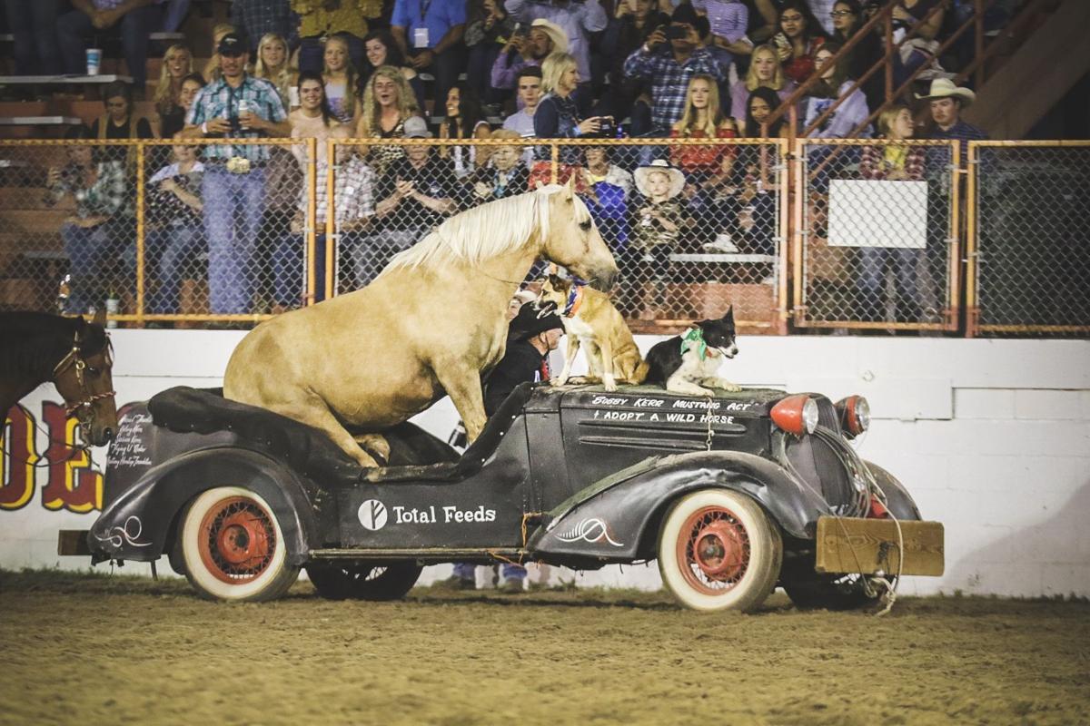 Gallery: Buffalo Bill Rodeo 2019