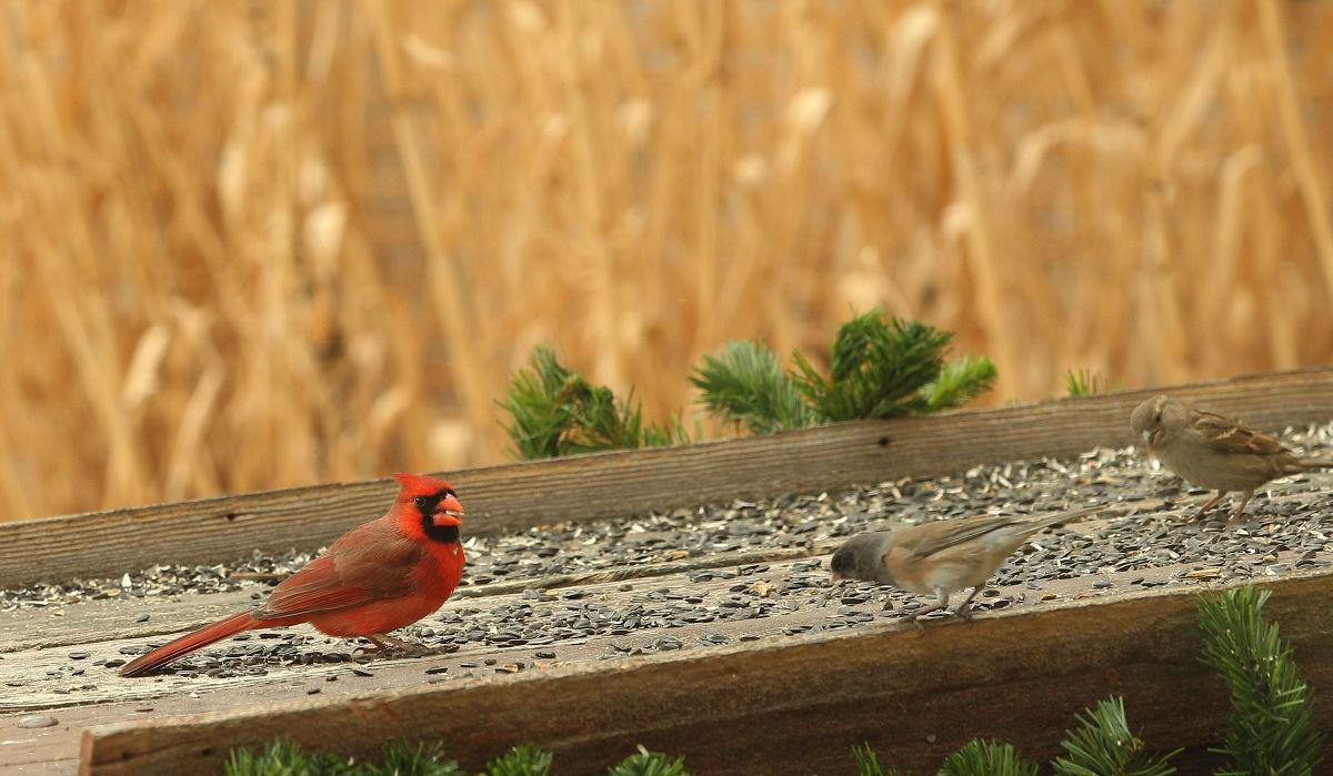 Birds In Your Backyard feed birds in your backyard this spring | outdoor sports