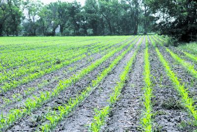 Drought still felt by farmers, ranchers