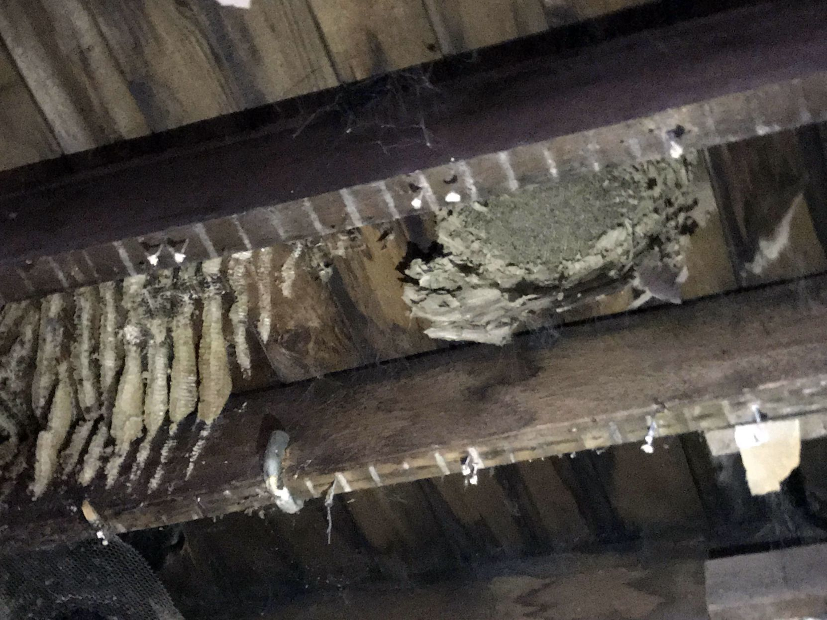 Porter County Museum Secrets emerge at old