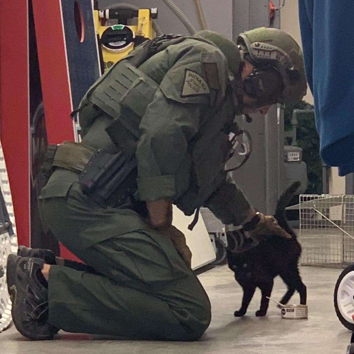 Stray kitten finds new home after wandering into SWAT training zone