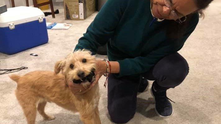 'There's some good in this world': Marine veteran reunited with lost dog