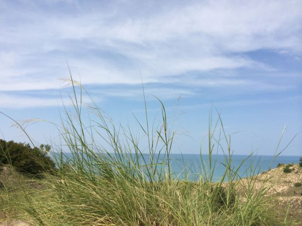 THE SOUTH SHORE IN 100 OBJECTS, DAY 97: Dune grass