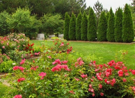 Rose garden Taltree