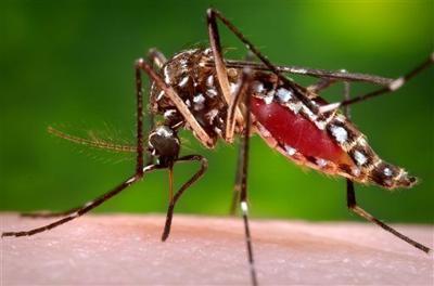 Indiana officials confirm first human case of Zika virus