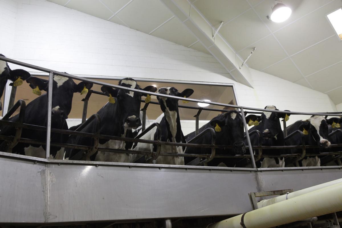 Modern milk