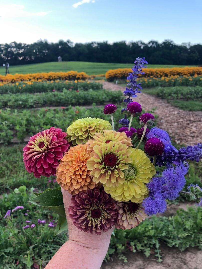 Harvest Tyme now open for flower picking