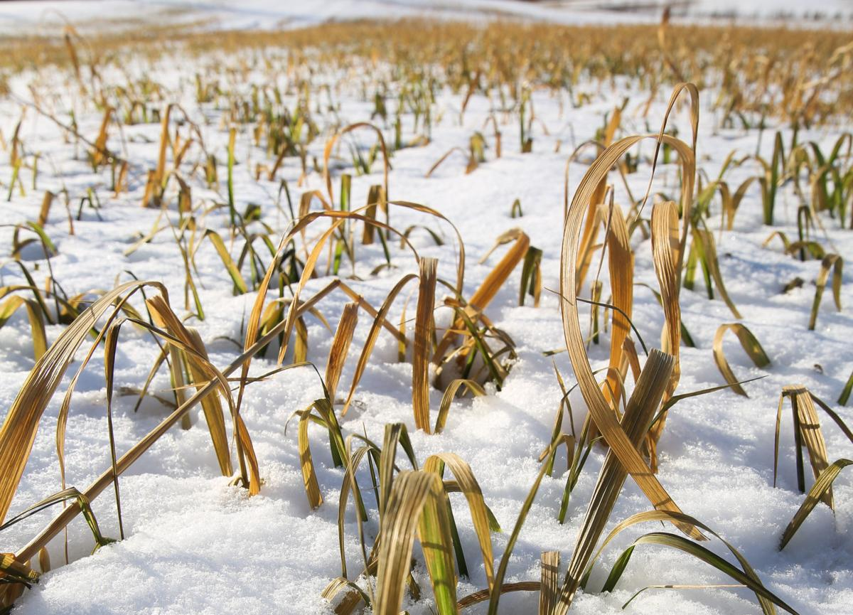 Cover crops now third to only corn and soybeans in Indiana