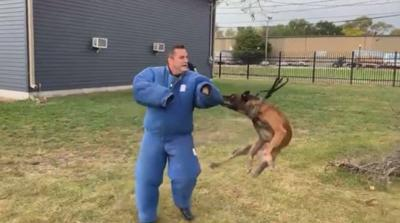 WATCH NOW: Mayor 'mauled' by Hammond K-9s