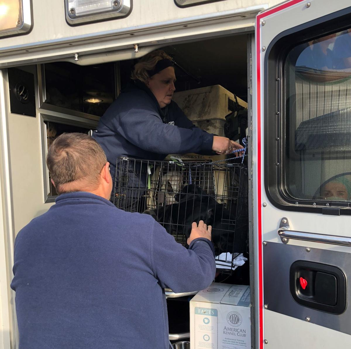 Rescue of pets displaced by Florida hurricane latest charitable effort from ambulance operator inHealth