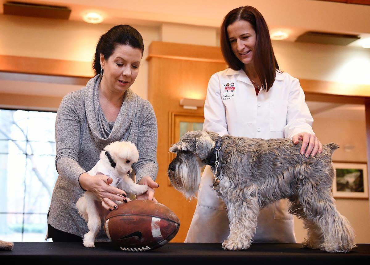Indiana 'First Dog' Henry Holcomb coaches rescue pup Pistachio in preparation for Puppy Bowl XV