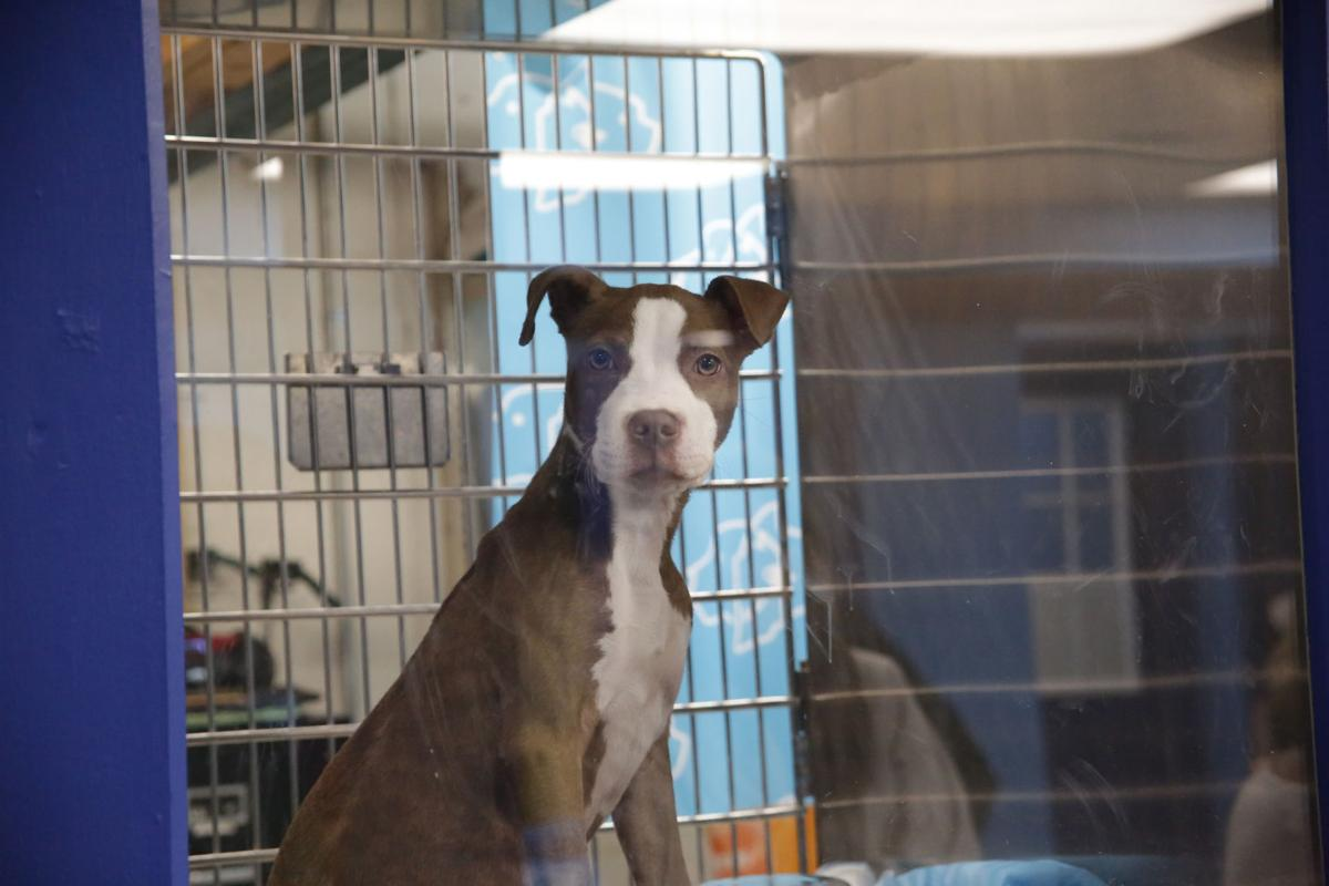 Humane Indiana opens at Alsip_0737.JPG