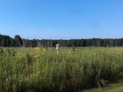 Lake County Parks at 50