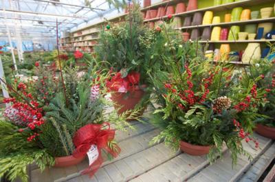 Best Garden Nursery Nwi Alsip Home
