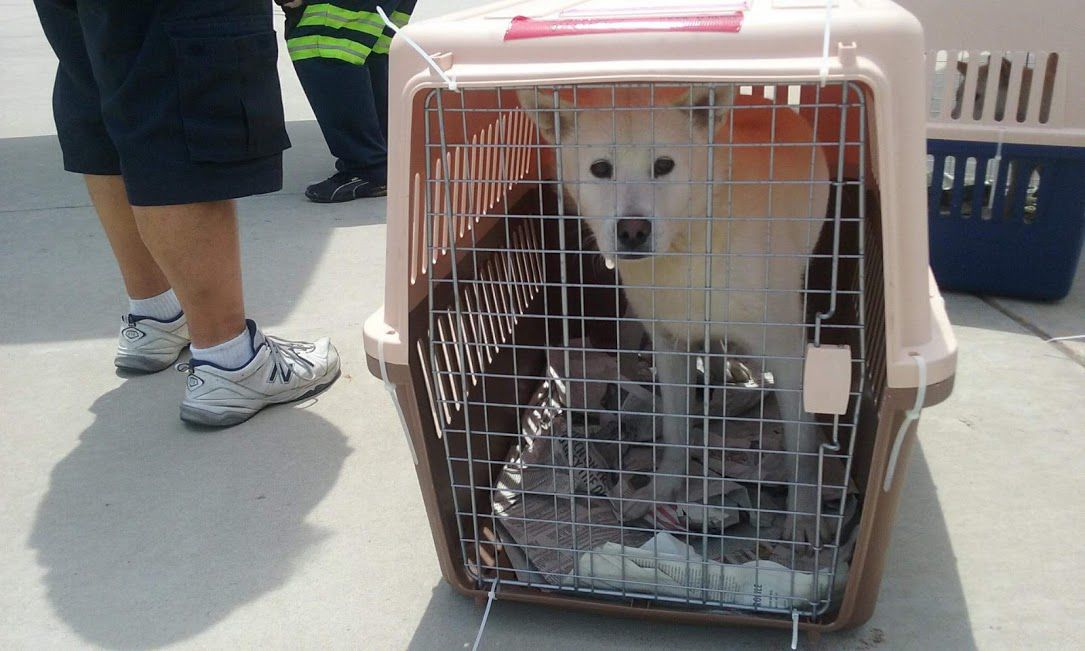 Humane Indiana takes in first international rescues, 5 dogs from South Korean dog meat farm