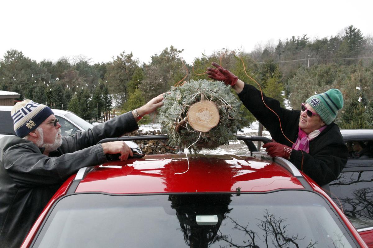 Area Christmas tree farms keep it real