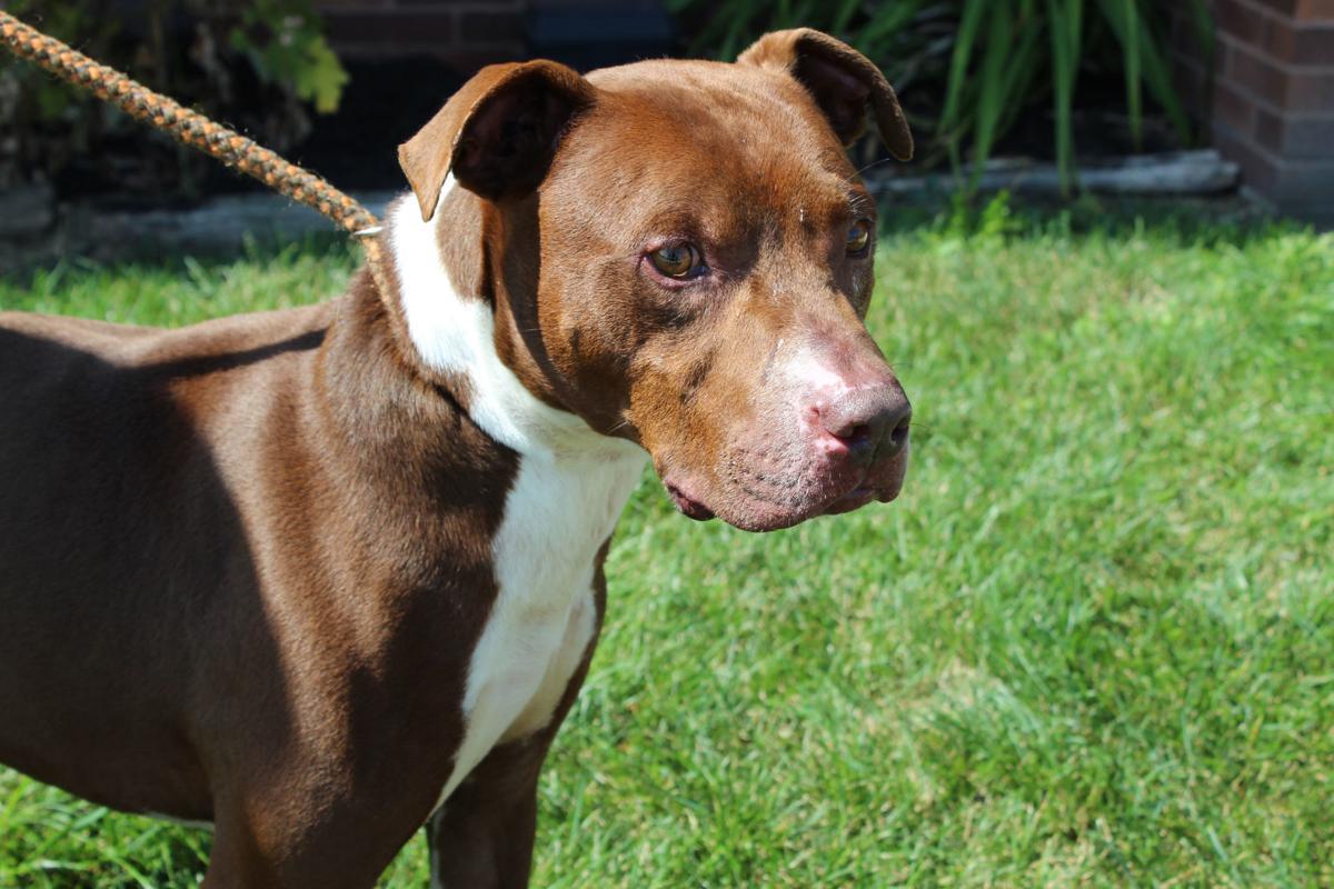 Donation a wash at Lake County Animal Shelter