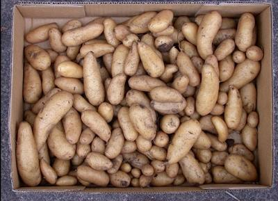 Potatoes pile on the nutrition but pamper the budget