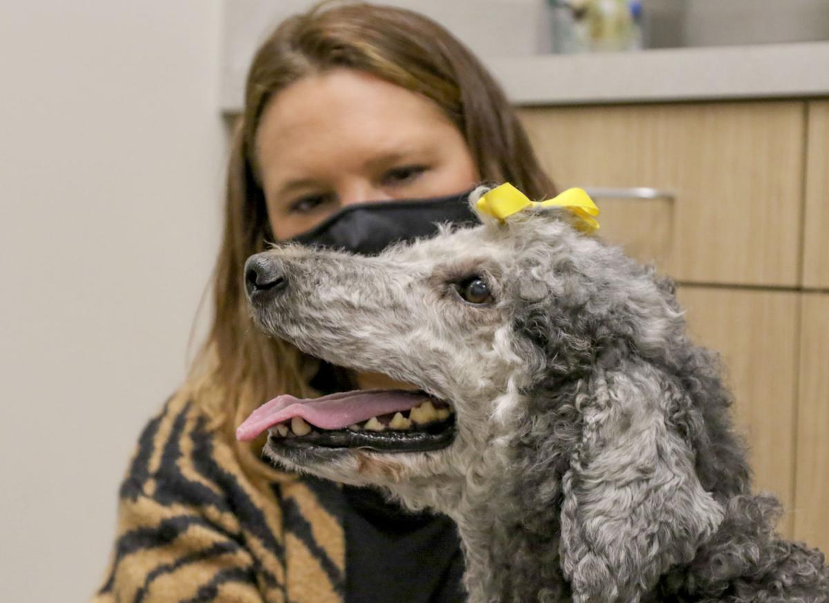 Vet saves dog's live