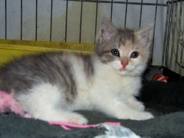 Pets of the Week | Lifestyles | nwitimes com