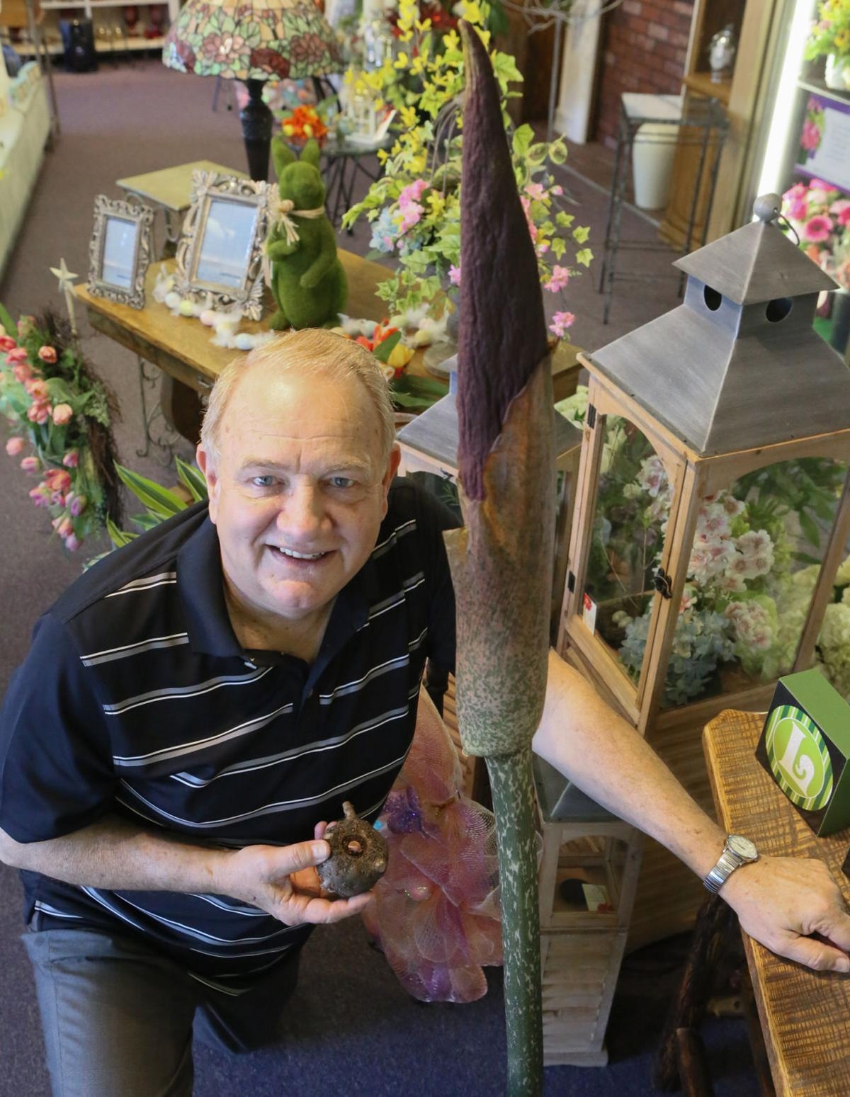 Bob Dixon has been growing the Corpse Flower for 30 years.