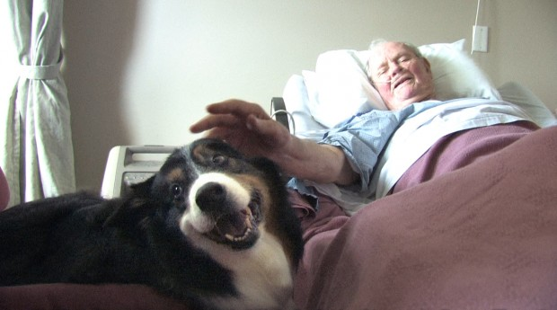 Dog visits hospice patients