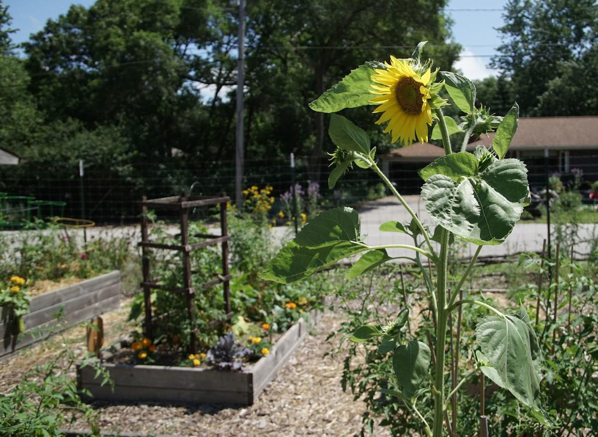 Ogden Dunes gardeners form a community, share the vegetables of their labors