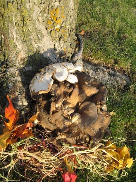 Vertical Mushroom Moment