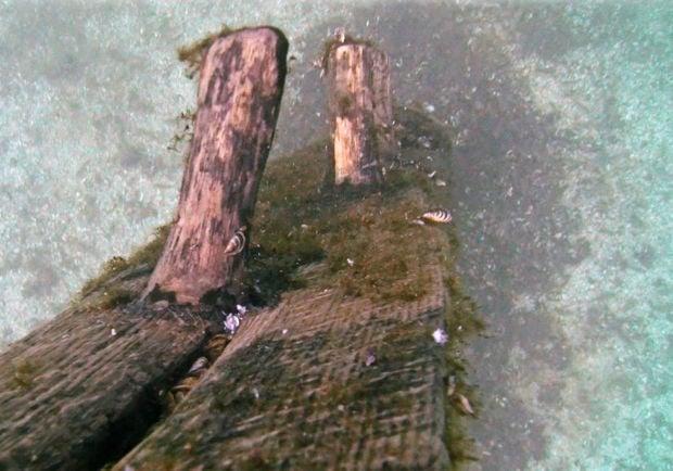 Griffin Shipwreck