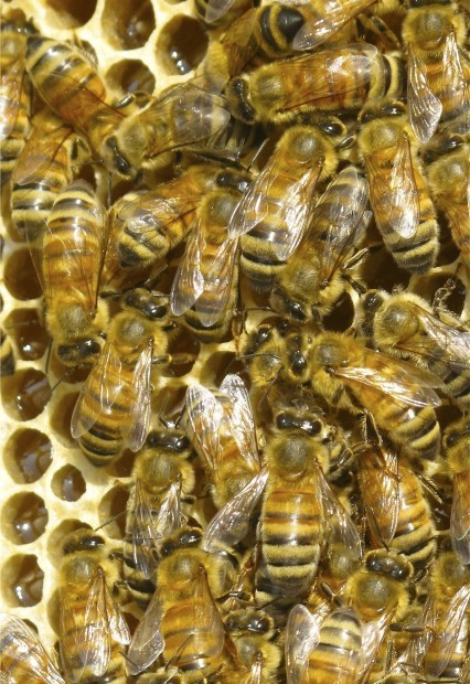 Close View of Bee Hive Comb
