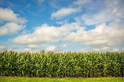 Agricultural businesses can now apply for COVID-19 loans from the SBA