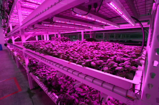 Green Sense Farms Bring Organic Farming Inside Portage