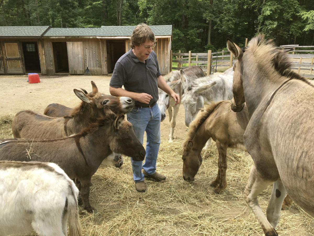 De-stressing With Donkeys