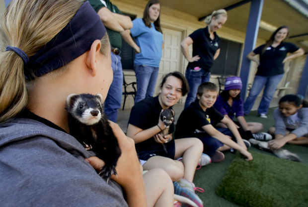Pets Shelters Summer Camps