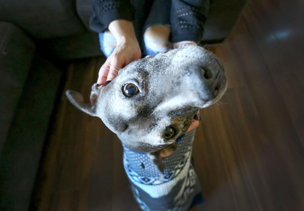 Tyson finds furrever homes