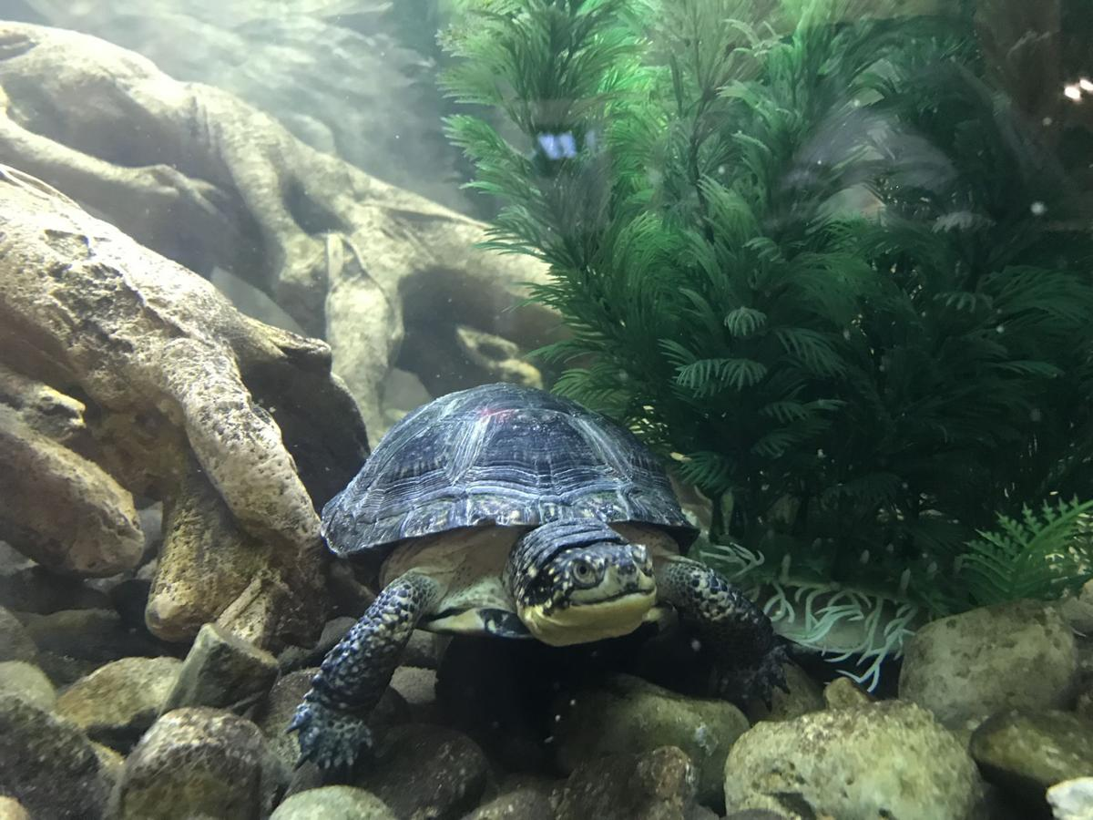 Things to do Turtles