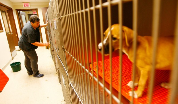 Humane Society runs out of space, looks for good homes for more than 100 pets