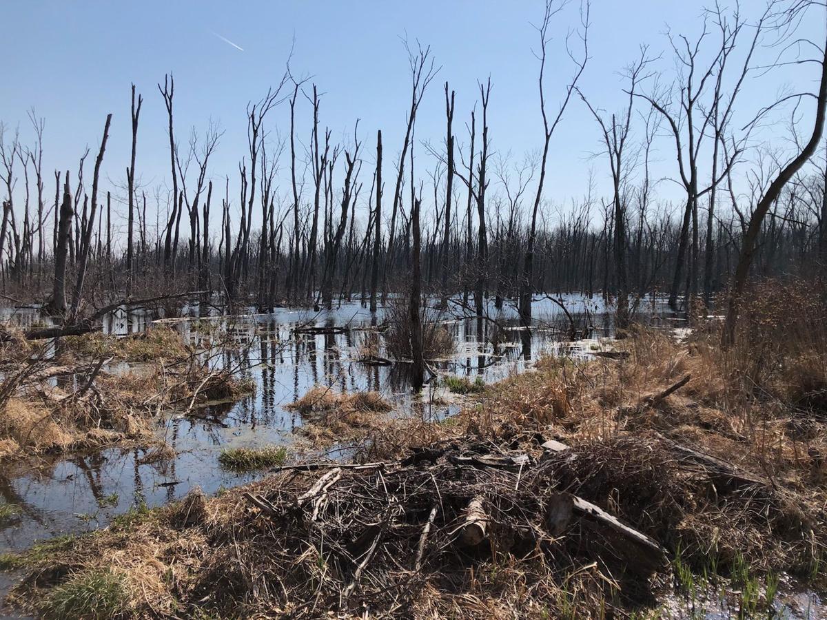 Wetlands regulation