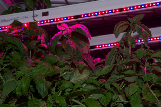 Green Sense Farms expands to China