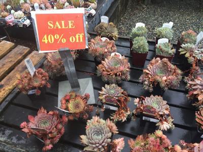 Gardening Bargains