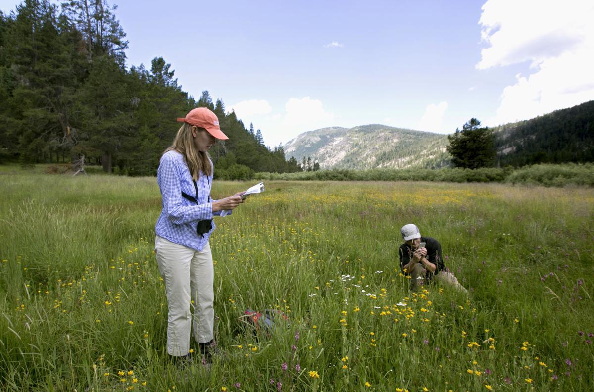 Sierra Mountain Meadow