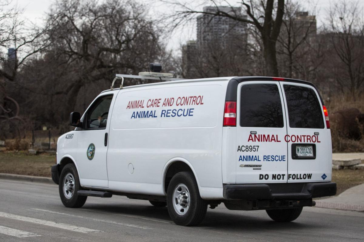 Chicago-Coyote Attacks