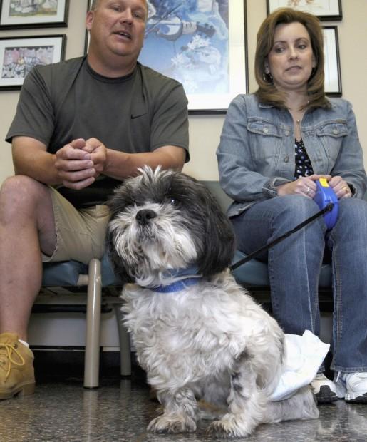 Resilient dog survives prostatte cancer