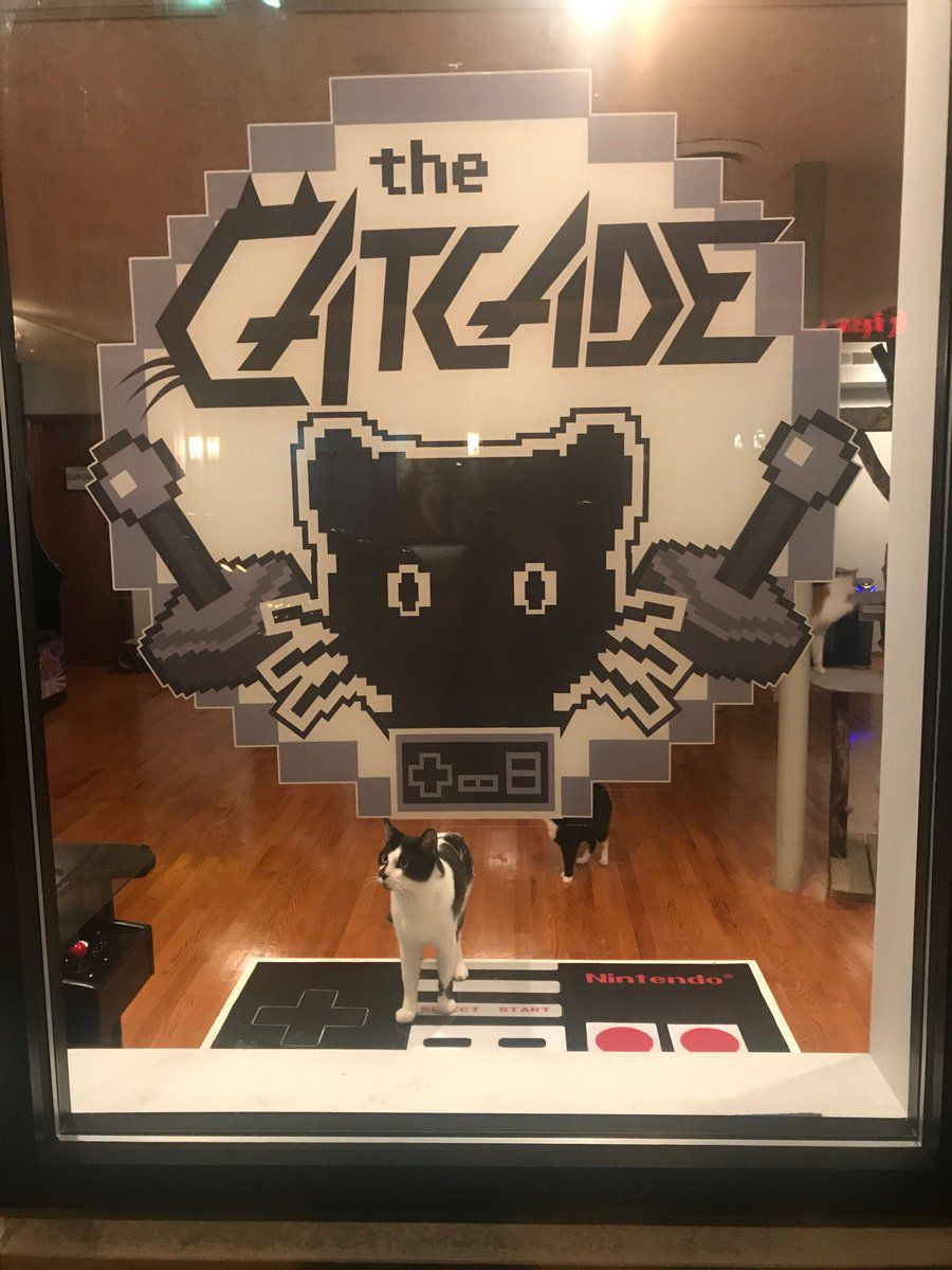 BLOG: Cat Cafe/arcade like catnip for cat lovers in Chicago's Lakeview neighborhood