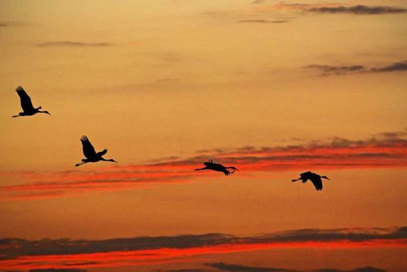 Paddlers can see sandhill cranes on the Kankakee River this weekend