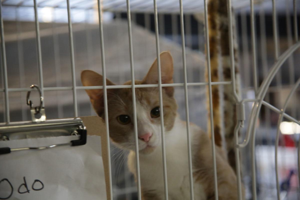 021219-nws-feline The Feline Community Network pounces on new l